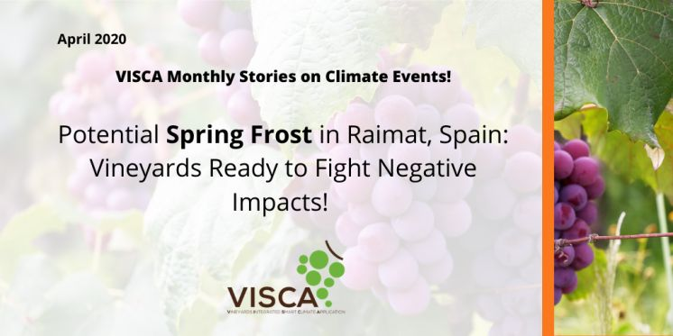 VISCA Announces Potential Spring Frost in Raimat: Vineyards Ready to Fight Negative Impacts!
